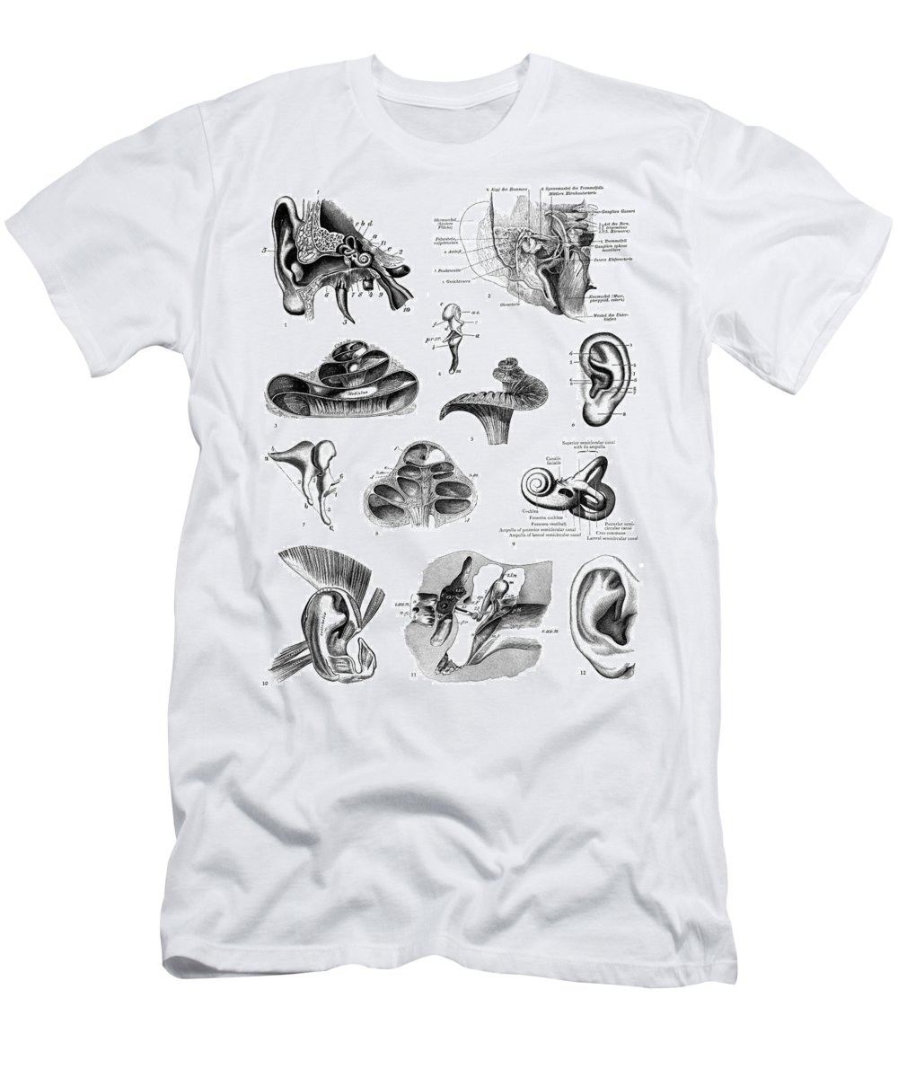 19th Century Men's T-Shirt (Athletic Fit) featuring the photograph Anatomy: Human Ear by Granger