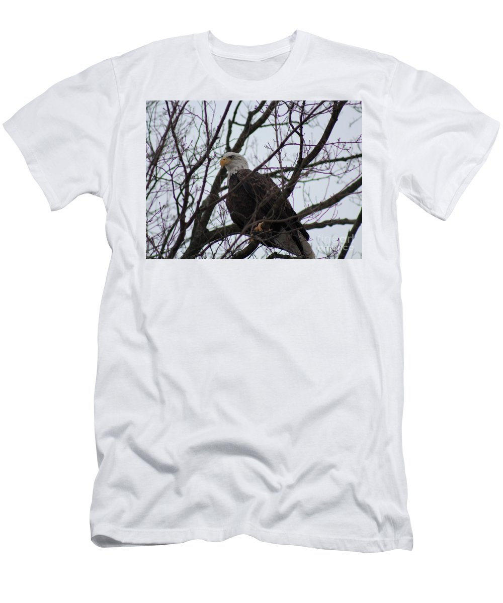Bald Eagle Men's T-Shirt (Athletic Fit) featuring the photograph Awesome by Stephanie Kripa