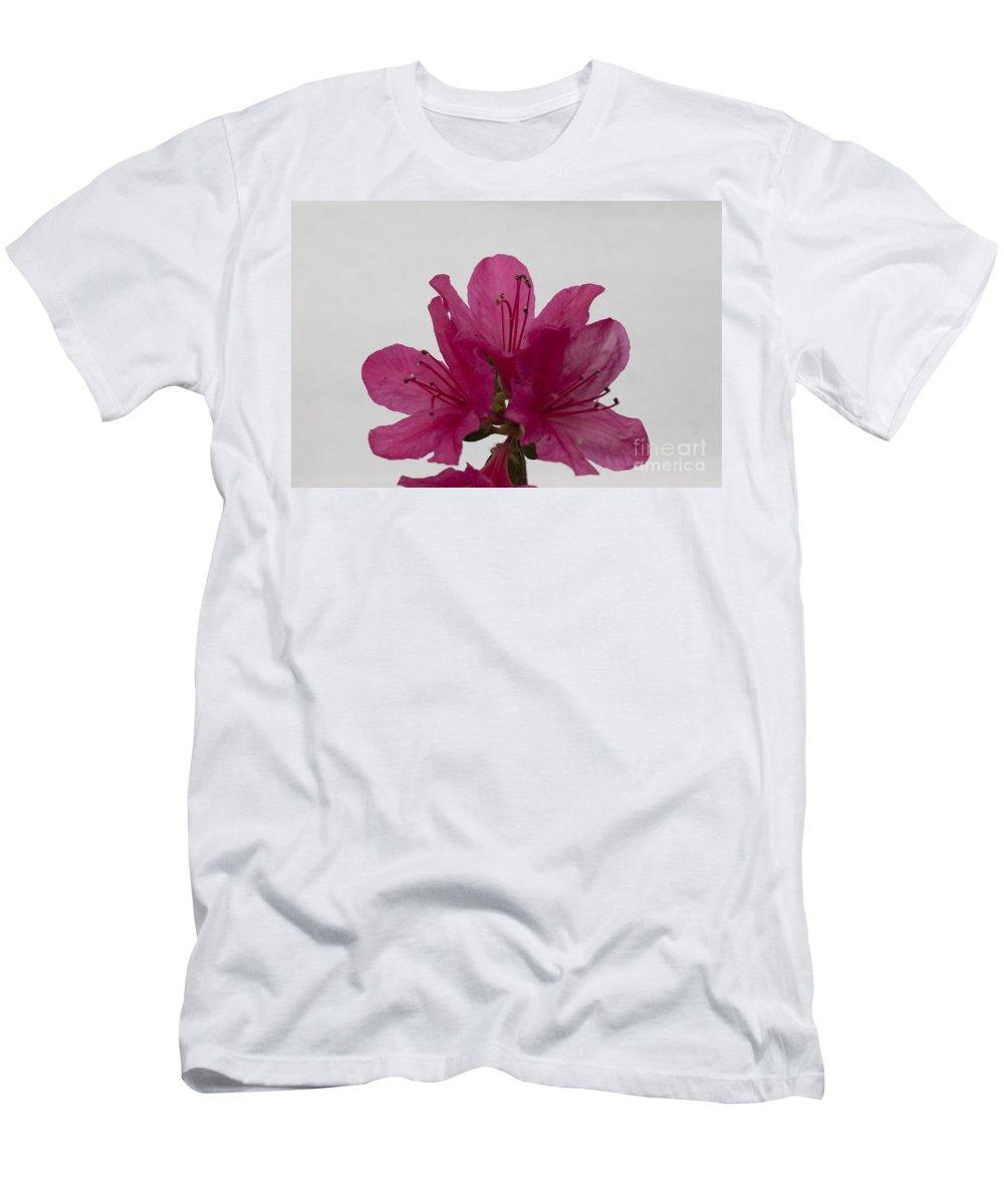 Azaleas Men's T-Shirt (Athletic Fit) featuring the photograph Azalea Rise by Amanda Barcon
