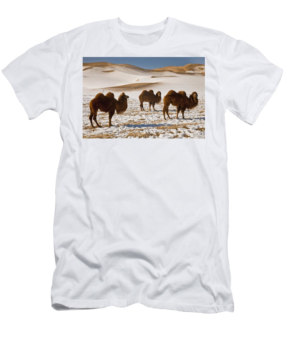 Feb0514 Men's T-Shirt (Athletic Fit) featuring the photograph Bactrian Camel Trio Khongor Sand Dunes by Colin Monteath