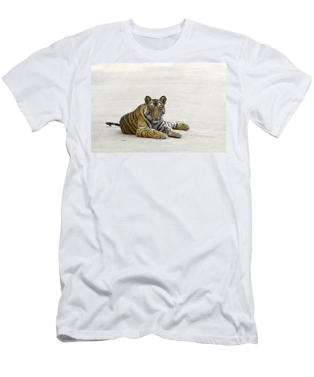 Feb0514 Men's T-Shirt (Athletic Fit) featuring the photograph Bengal Tiger Cub On Road Bandhavgarh Np by Suzi Eszterhas