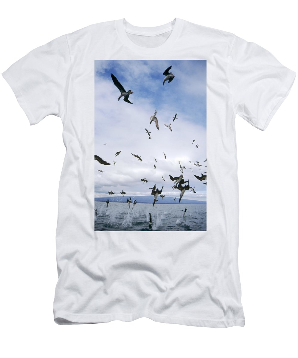 Feb0514 Men's T-Shirt (Athletic Fit) featuring the photograph Blue-footed Booby Diving For Herring by Tui De Roy
