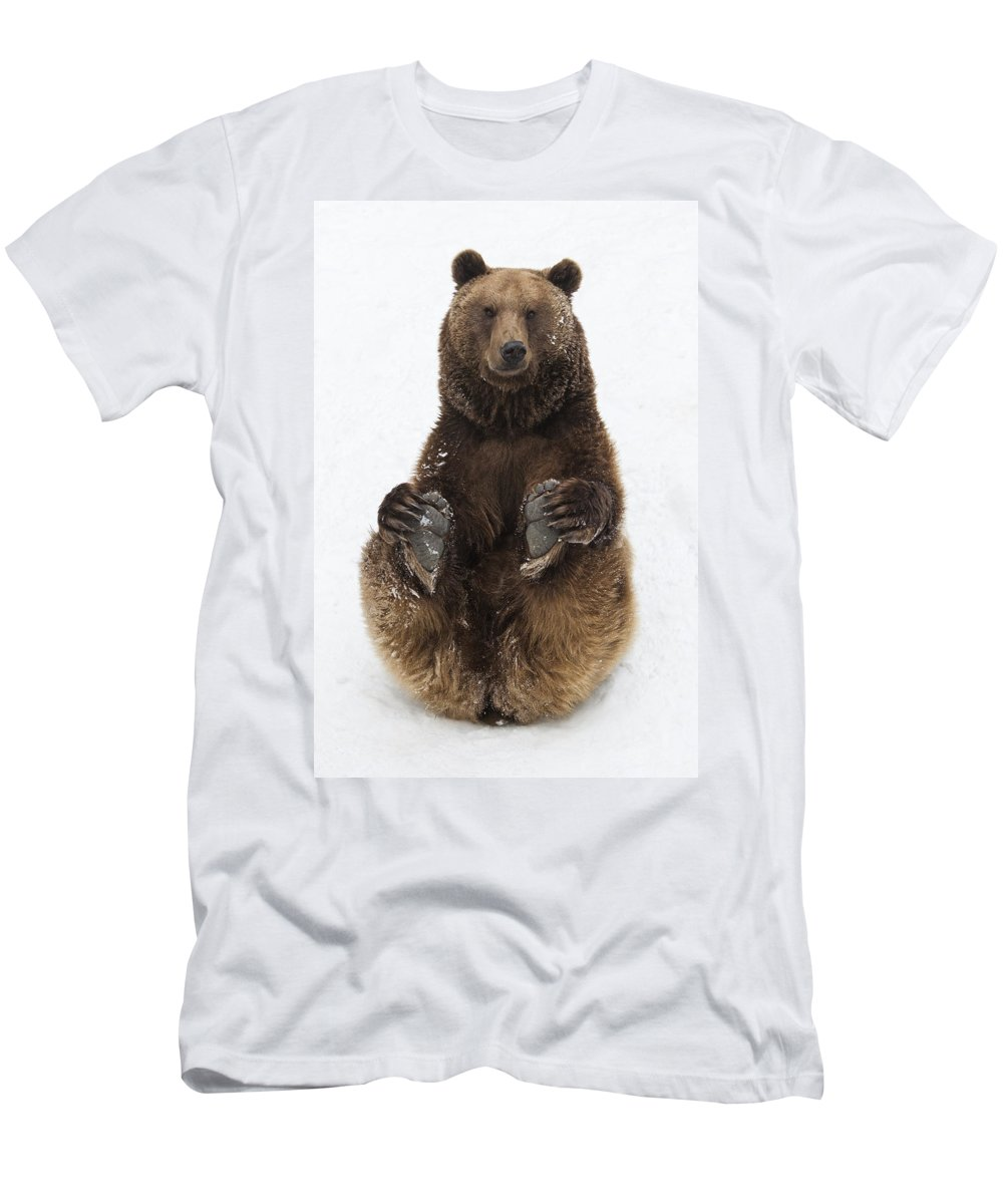 Feb0514 Men's T-Shirt (Athletic Fit) featuring the photograph Brown Bear Holding Its Paws Germany by Duncan Usher
