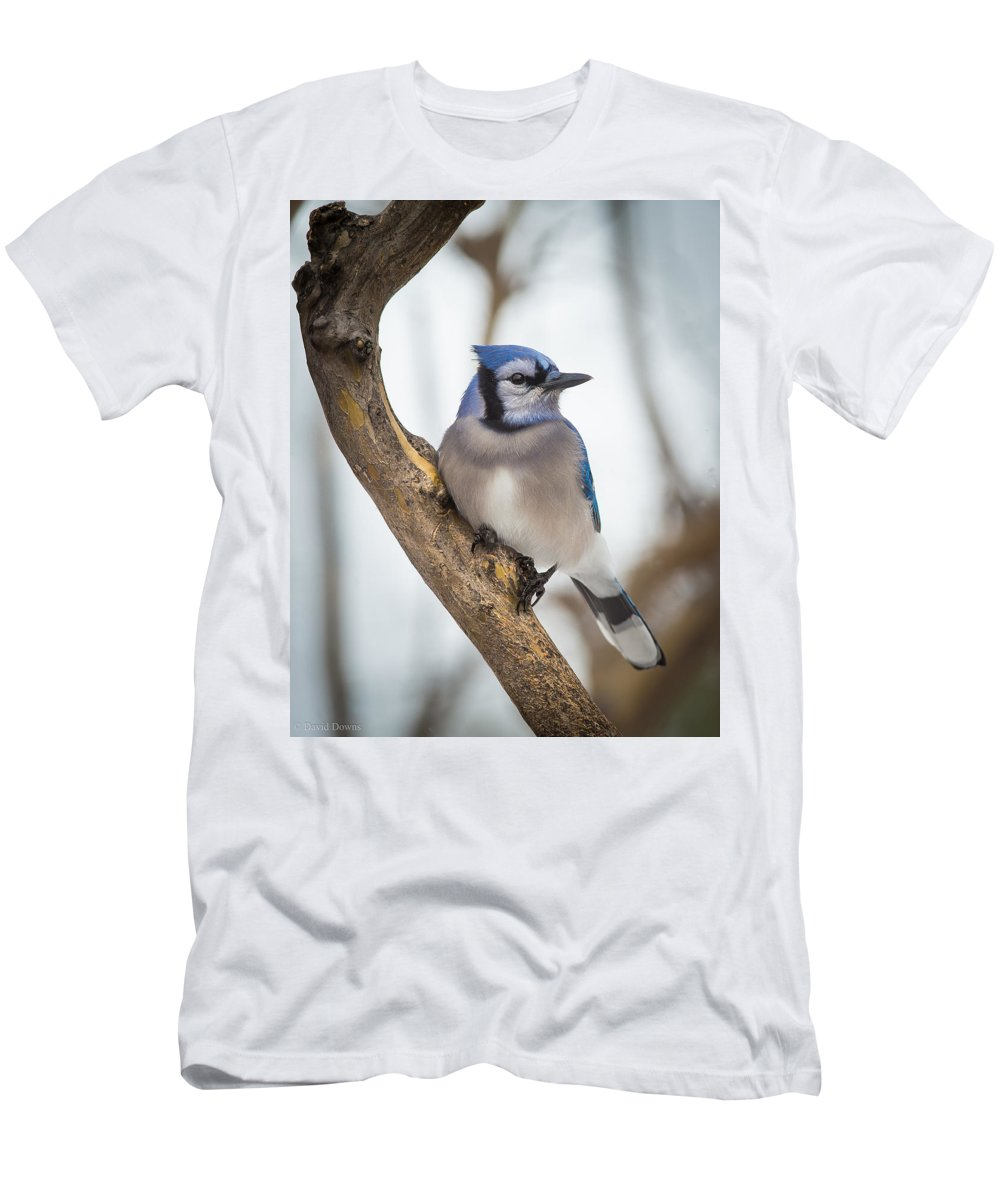 Blue Jay Men's T-Shirt (Athletic Fit) featuring the photograph Cautious Blue Jay by David Downs