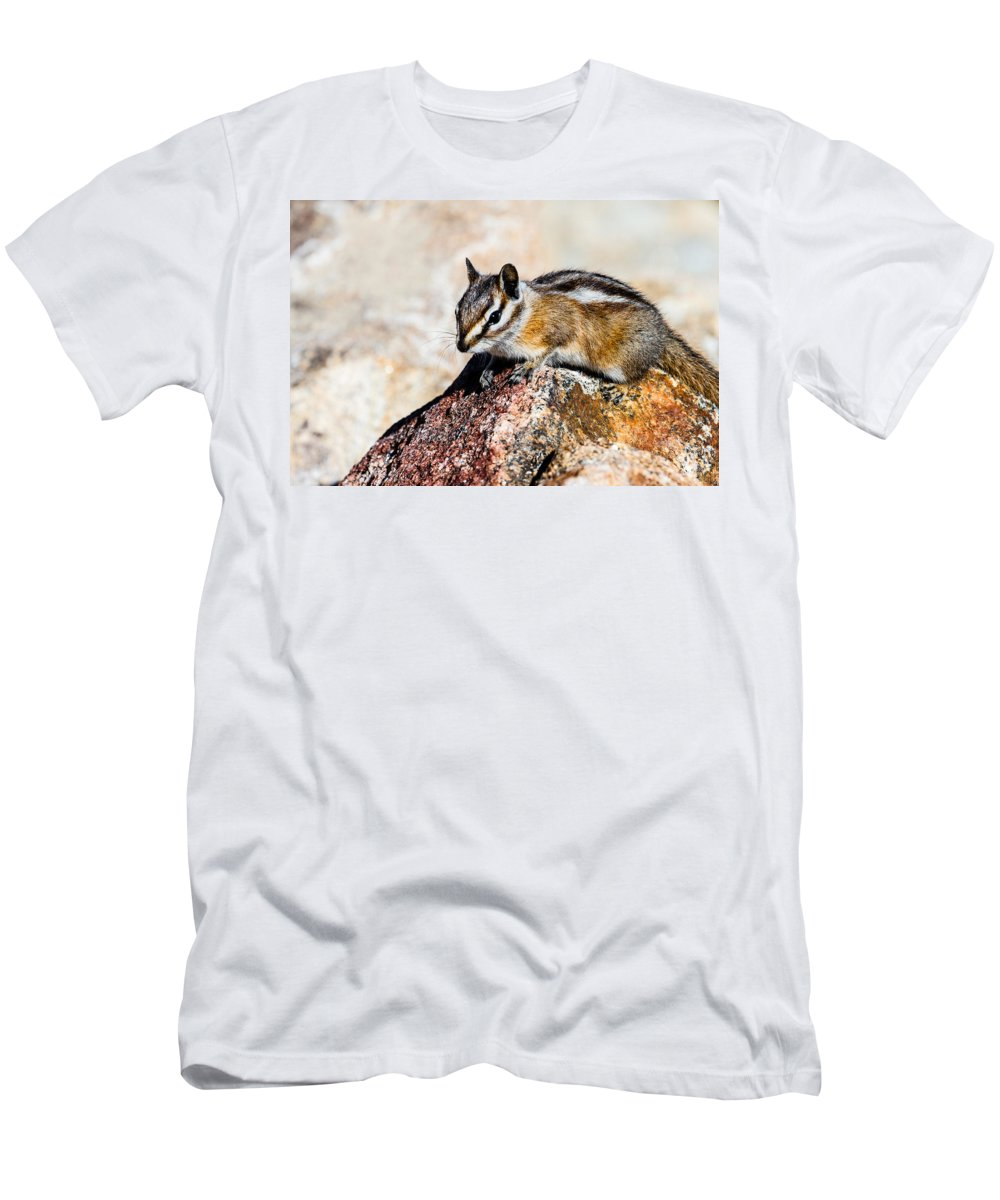 Chipmunk Men's T-Shirt (Athletic Fit) featuring the photograph Chipmunk by Ben Graham