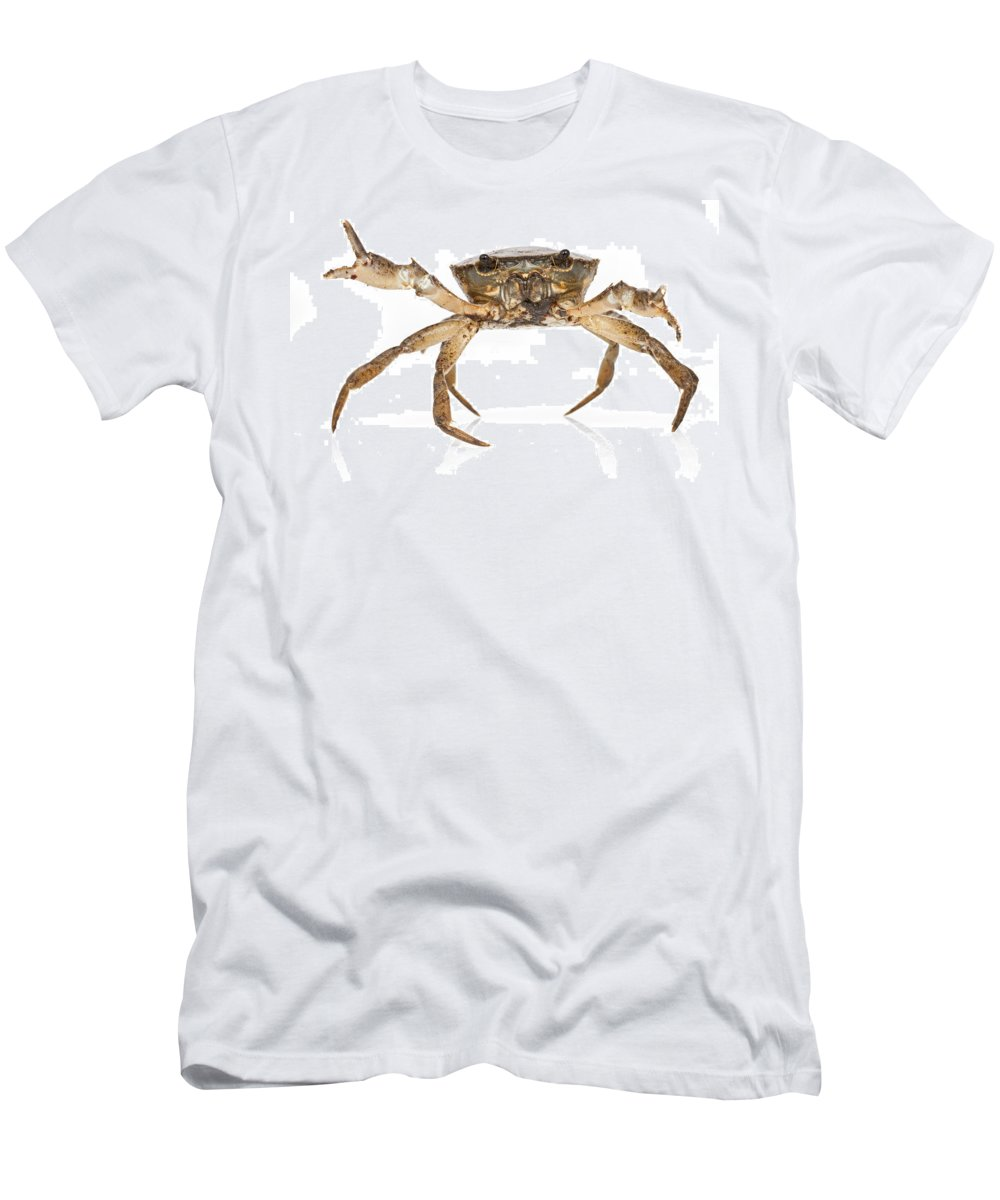 Feb0514 Men's T-Shirt (Athletic Fit) featuring the photograph Crab Suriname by Piotr Naskrecki