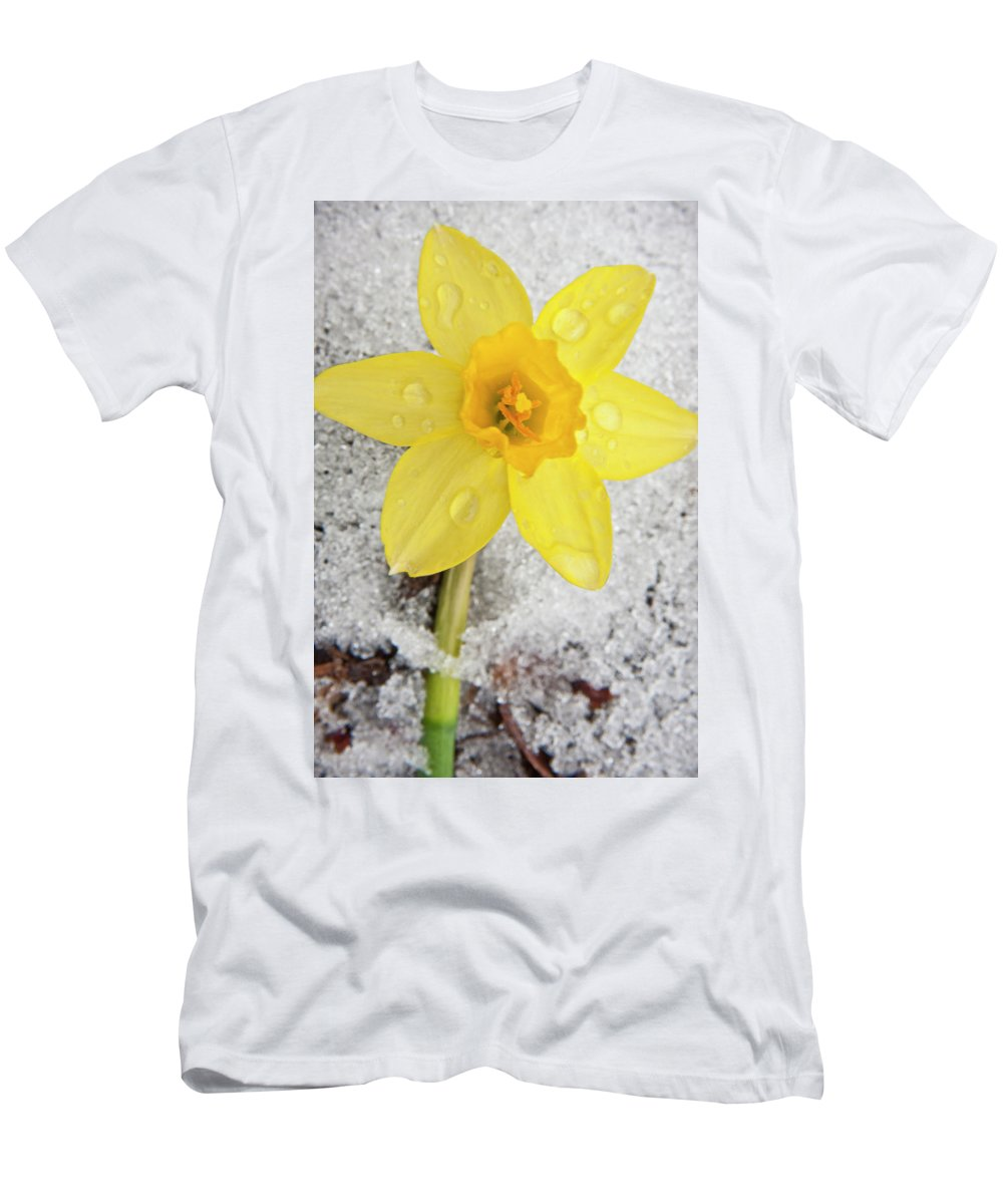 3scape Photos Men's T-Shirt (Athletic Fit) featuring the photograph Daffodil In Spring Snow by Adam Romanowicz
