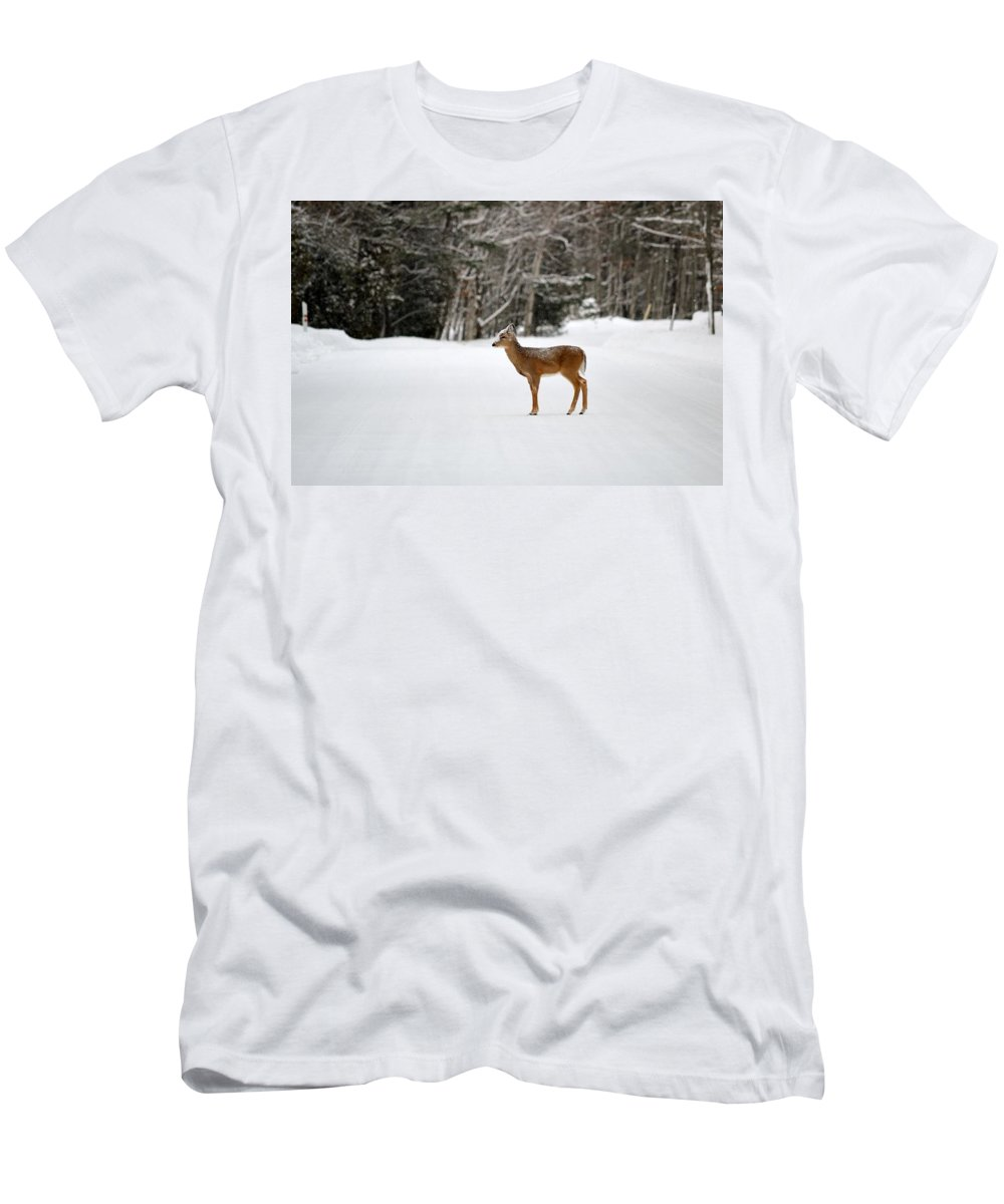 Michigan Men's T-Shirt (Athletic Fit) featuring the photograph Deer In Road by Linda Kerkau
