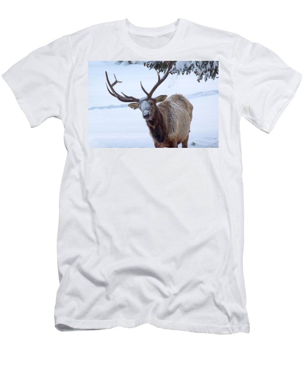 Snow T-Shirt featuring the photograph Dumped On by Shane Bechler