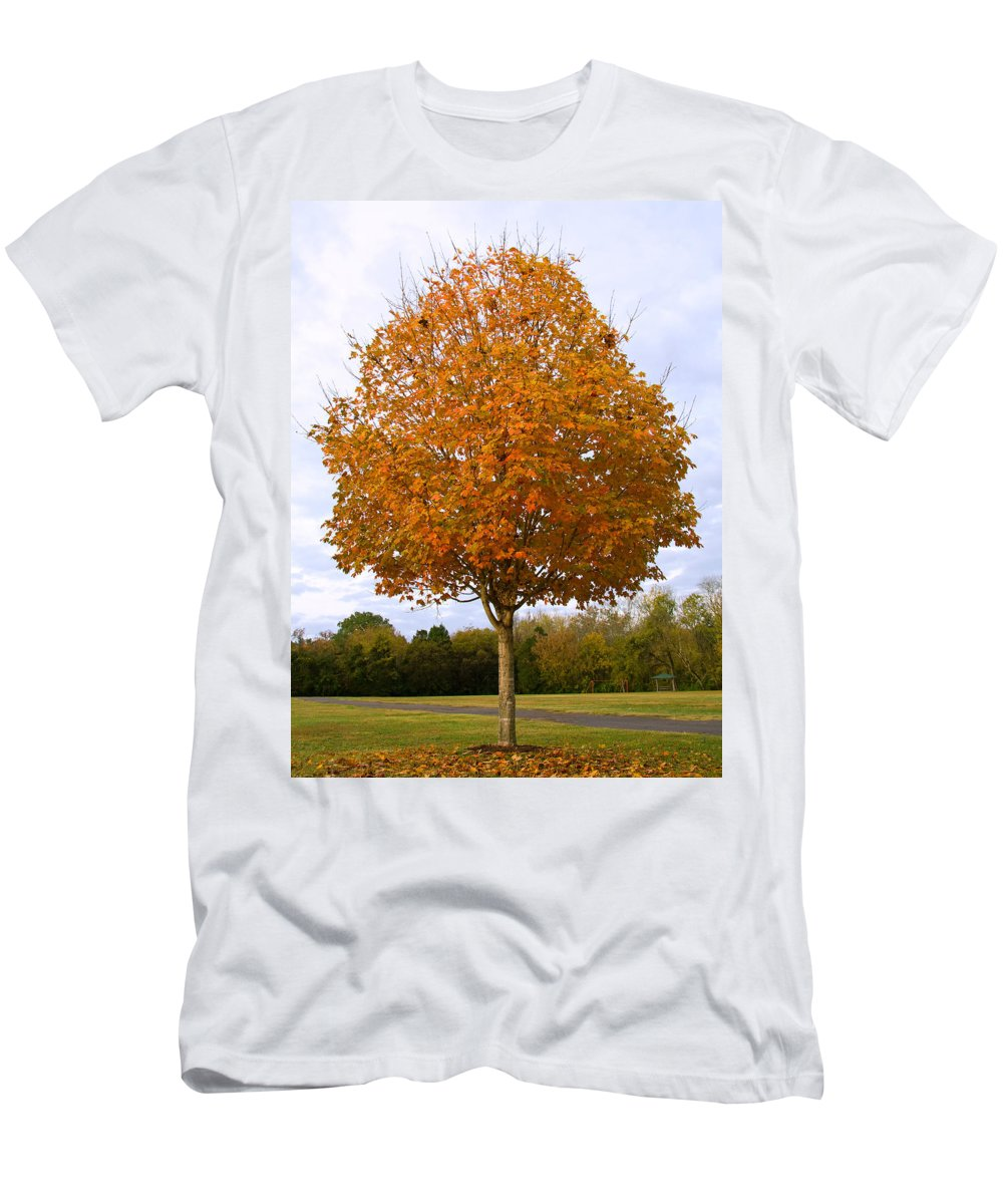 Maple Tree Men's T-Shirt (Athletic Fit) featuring the photograph Fall Sugar Maple by Melinda Fawver