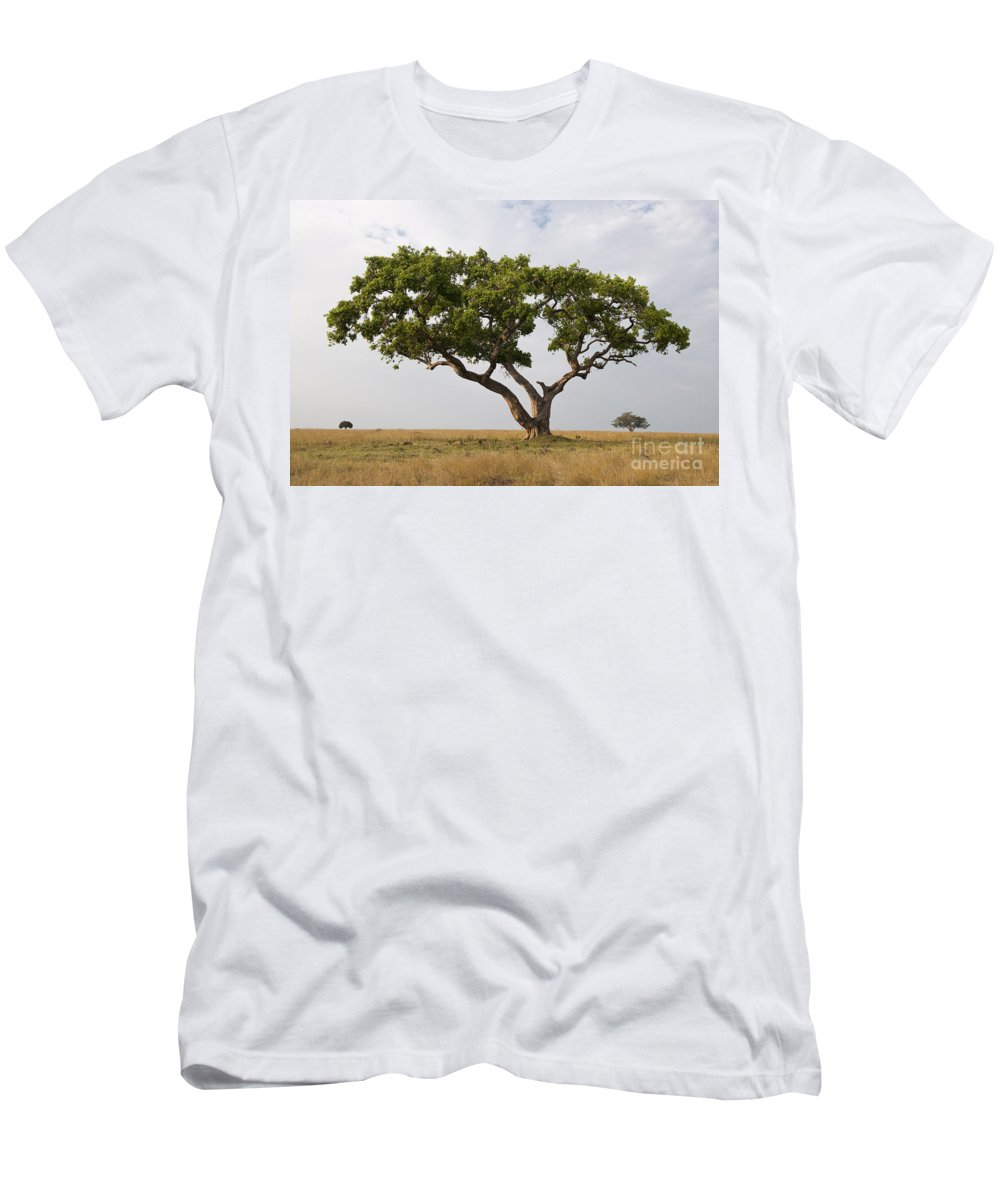 Biological Men's T-Shirt (Athletic Fit) featuring the photograph Ficus Tree, Masai Mara, Kenya by John Shaw