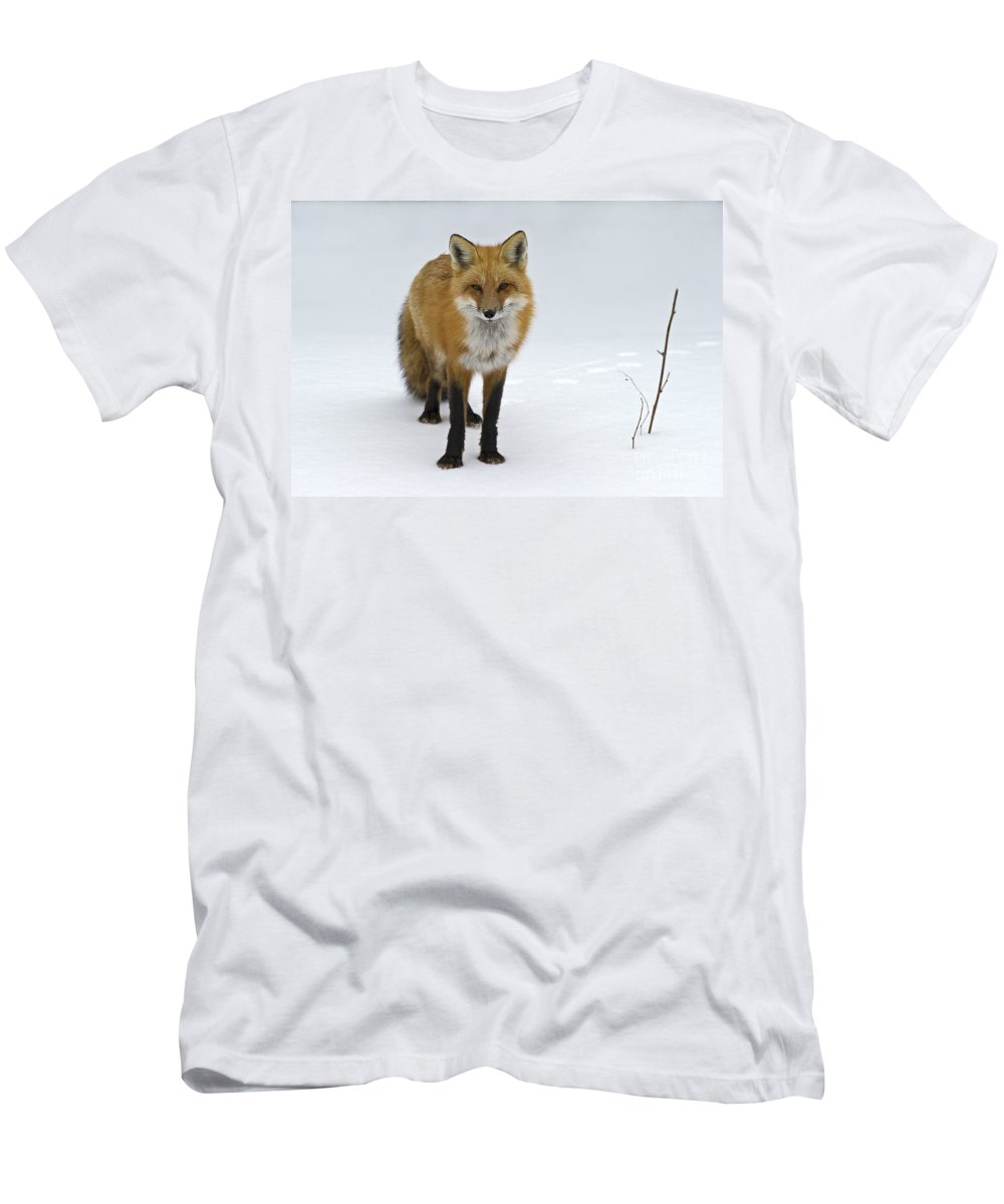 Festblues Men's T-Shirt (Athletic Fit) featuring the photograph Foxy.. by Nina Stavlund
