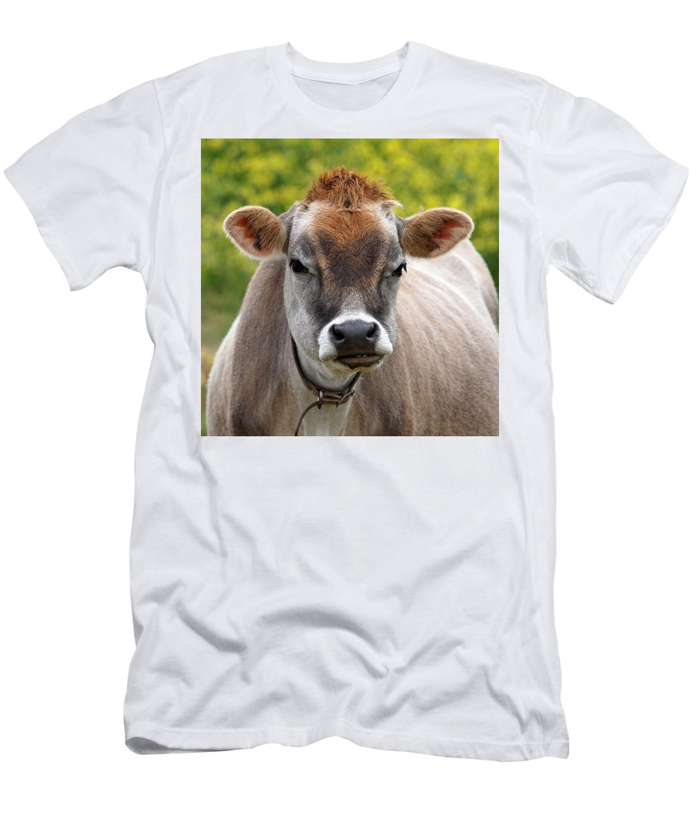 Jersey Cow Men's T-Shirt (Athletic Fit) featuring the photograph Funny Jersey Cow -square by Gill Billington