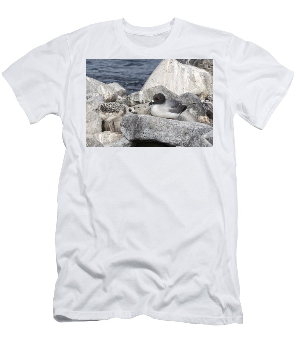 Galapagos Men's T-Shirt (Athletic Fit) featuring the photograph Galapagos Seagull And Her Chick by Angela Stanton