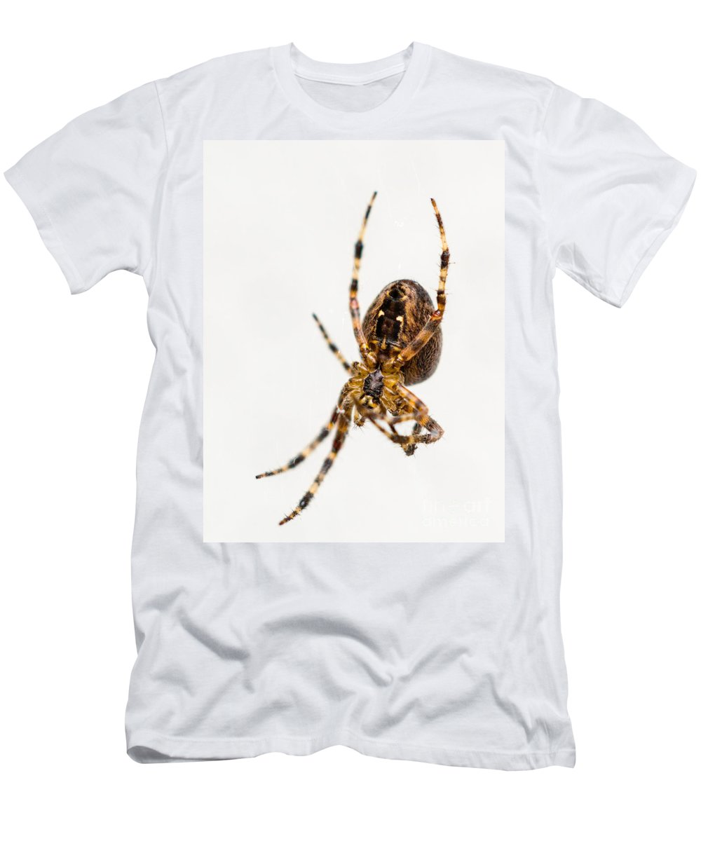 Arachnid Men's T-Shirt (Athletic Fit) featuring the photograph Garden Spider Profile by Tracy Knauer