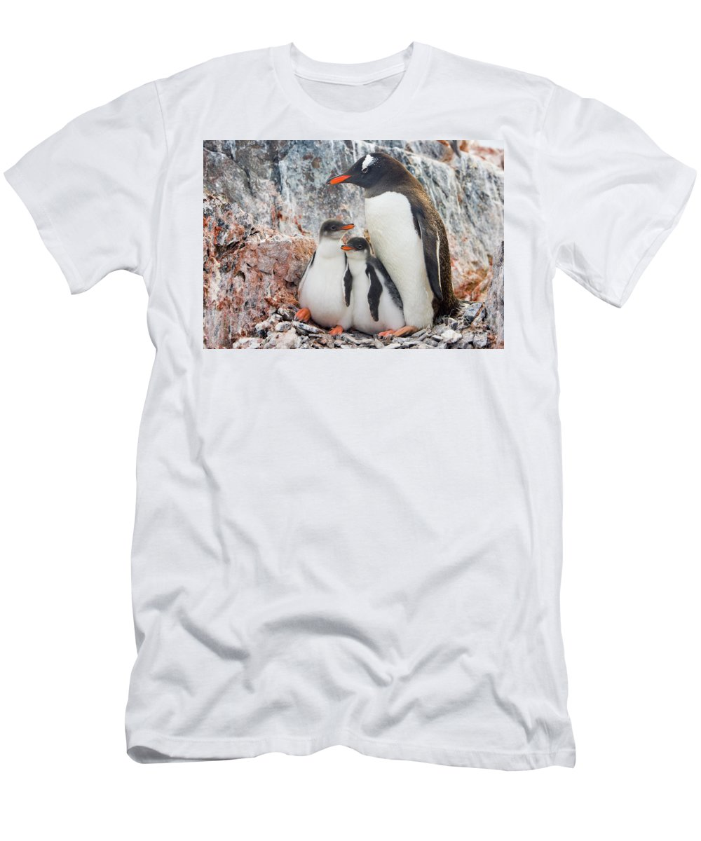 00345581 T-Shirt featuring the photograph Gentoo Penguin Family on Booth Isl by Yva Momatiuk and John Eastcott