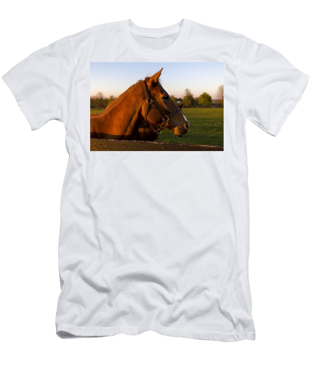 Animal Men's T-Shirt (Athletic Fit) featuring the photograph Golden Light by Jack R Perry