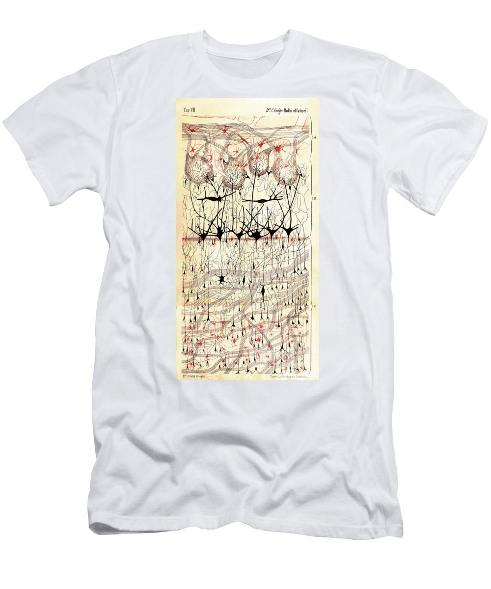 Golgi Men's T-Shirt (Athletic Fit) featuring the photograph Golgi Olfactory Bulb Of Dog by Science Source