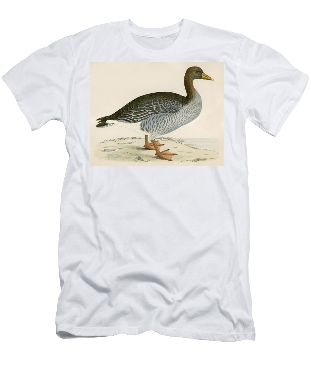 Birds Men's T-Shirt (Athletic Fit) featuring the photograph Gray Lag Goose by Beverley R. Morris
