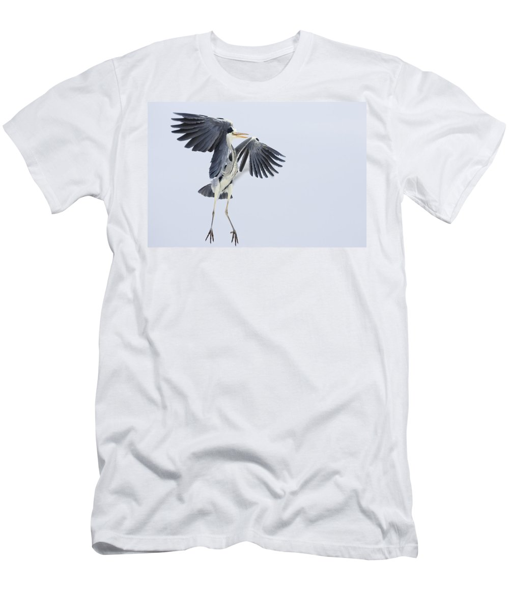 Feb0514 Men's T-Shirt (Athletic Fit) featuring the photograph Grey Heron Landing Germany by Konrad Wothe
