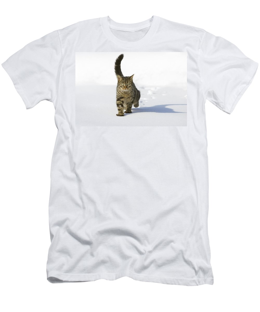Feb0514 Men's T-Shirt (Athletic Fit) featuring the photograph House Cat Male Walking In Snow Germany by Konrad Wothe