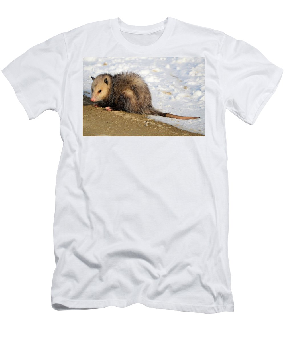 Possum Men's T-Shirt (Athletic Fit) featuring the photograph I'm A Possum by Bonfire Photography
