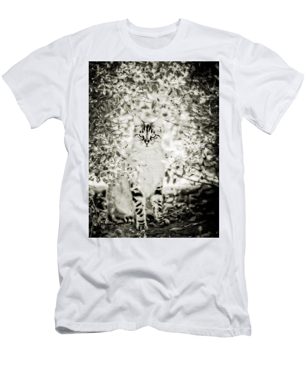 Outdoor Cats Men's T-Shirt (Athletic Fit) featuring the photograph In The Bush by Kim Henderson