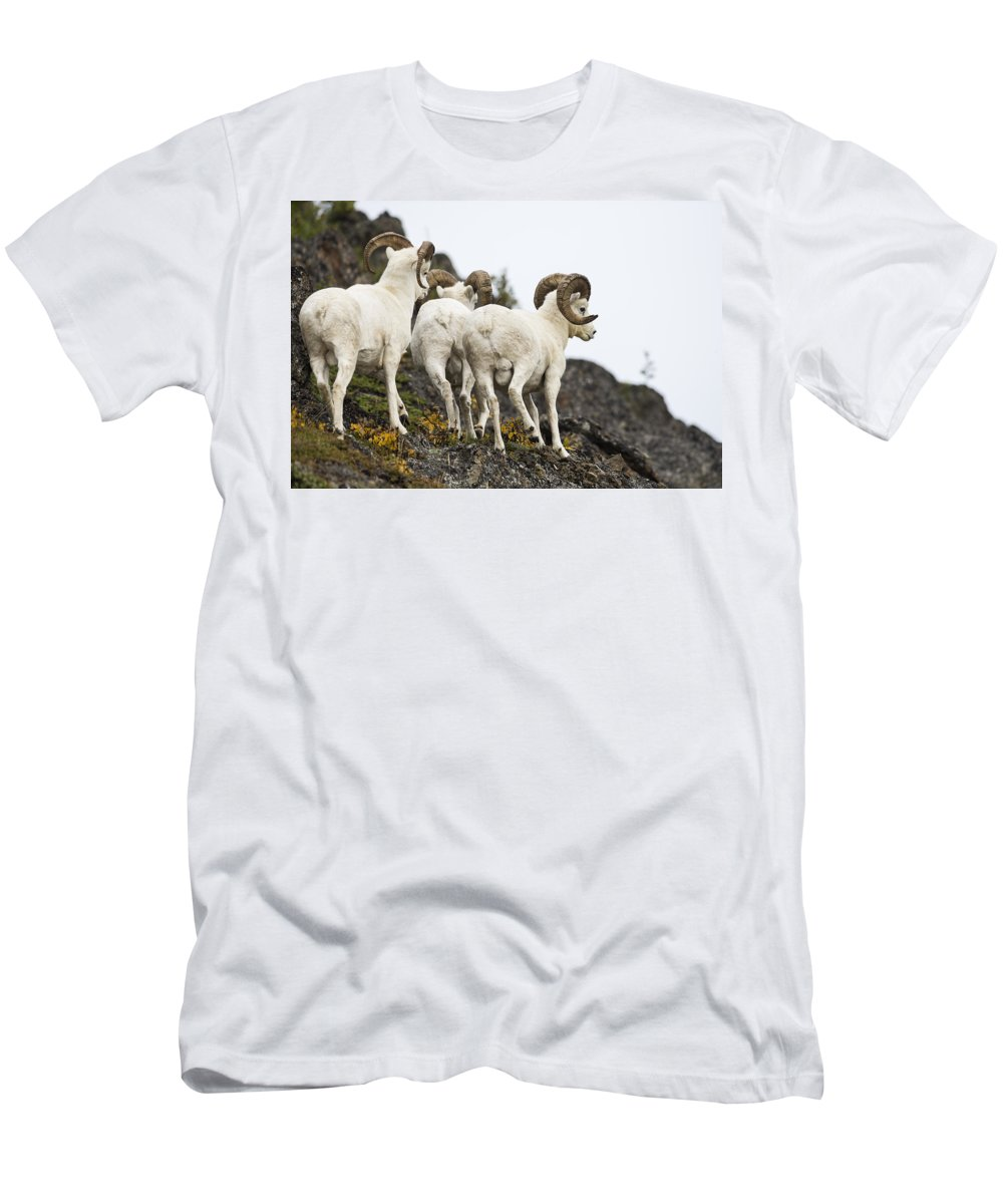 Ovis Dalli Men's T-Shirt (Athletic Fit) featuring the photograph King Of The Mountain by Ted Raynor