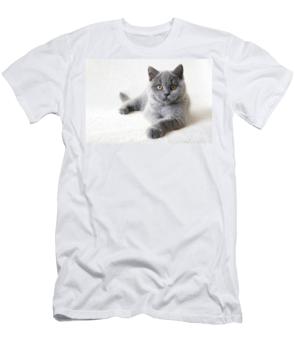 Katze Men's T-Shirt (Athletic Fit) featuring the pyrography little Friend by Steffen Gierok
