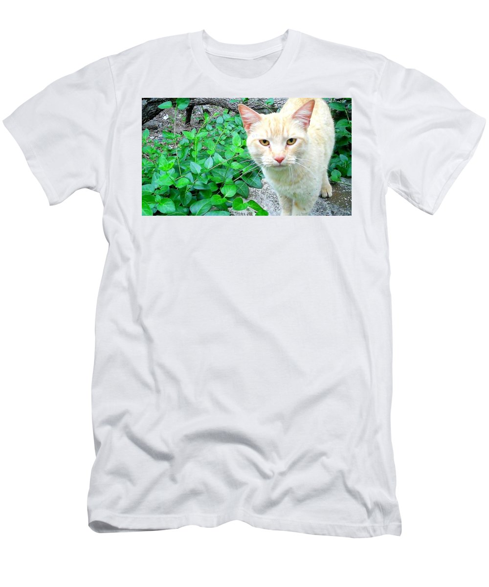 Yellow Men's T-Shirt (Athletic Fit) featuring the photograph Meow by Cindy New