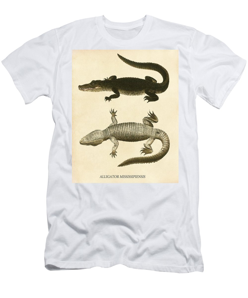 Mississippi Men's T-Shirt (Athletic Fit) featuring the drawing Mississippi Alligator by Pati Photography