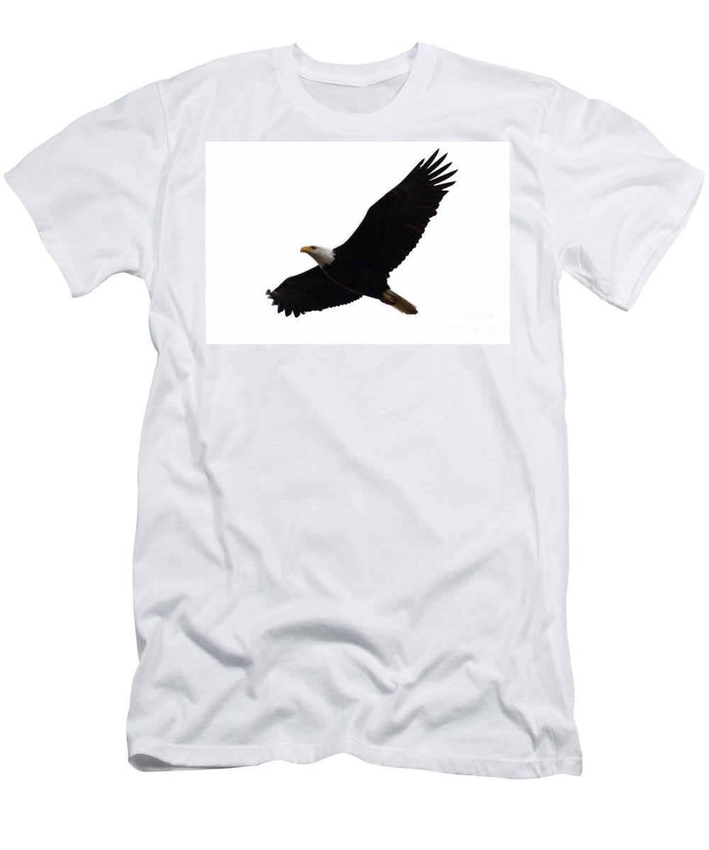 Bald Eagle Men's T-Shirt (Athletic Fit) featuring the photograph Nisqually Eagle by John Daly