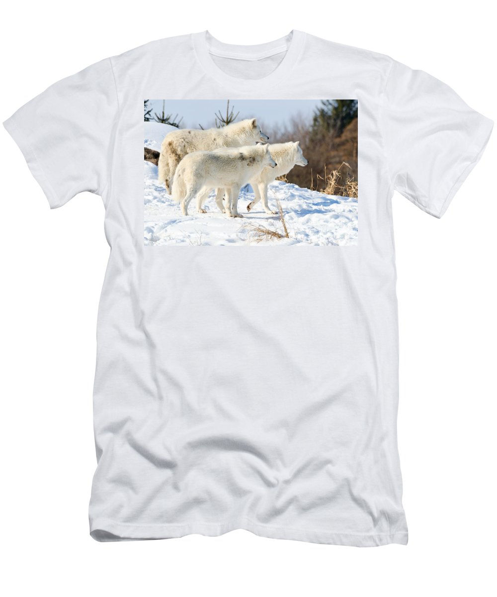 Pack Men's T-Shirt (Athletic Fit) featuring the photograph Pack Of Arctic Wolves by Les Palenik