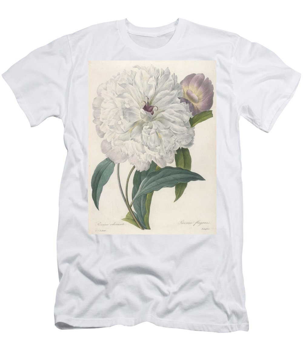 Redoute Men's T-Shirt (Athletic Fit) featuring the painting Paeonia Flagrans Peony by Pierre Joseph Redoute