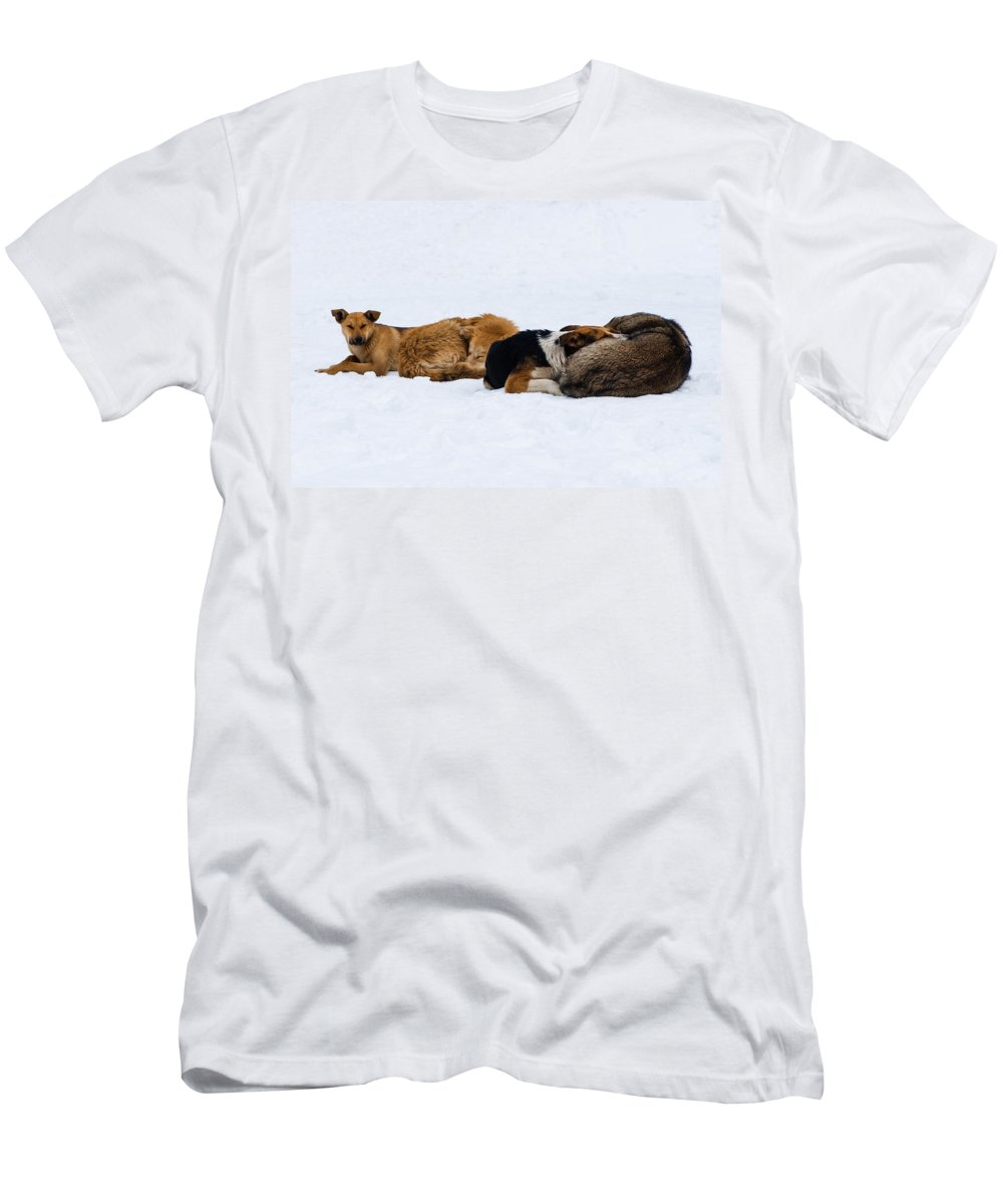 Animal Men's T-Shirt (Athletic Fit) featuring the photograph Pariah Dogs On The Snow - Featured 2 by Alexander Senin