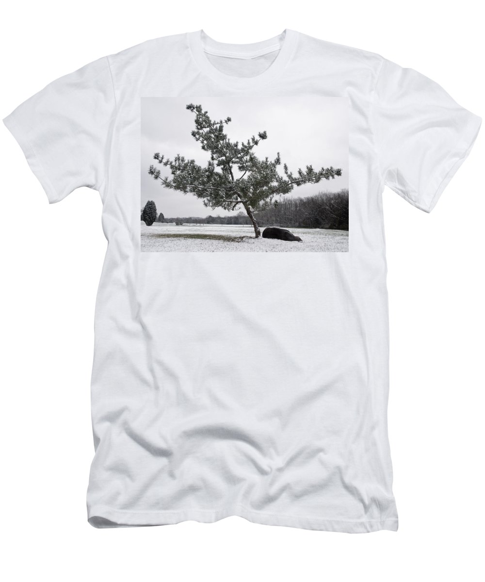Virginia Pine Men's T-Shirt (Athletic Fit) featuring the photograph Pine Tree by Melinda Fawver
