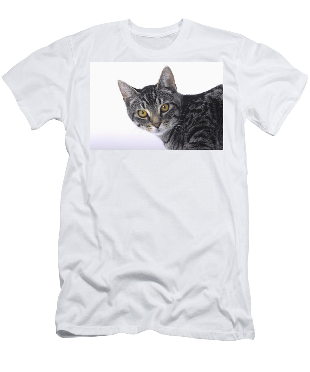 House Pet Men's T-Shirt (Athletic Fit) featuring the photograph Portrait Of A Grey Tabby Catvancouver by Thomas Kitchin & Victoria Hurst