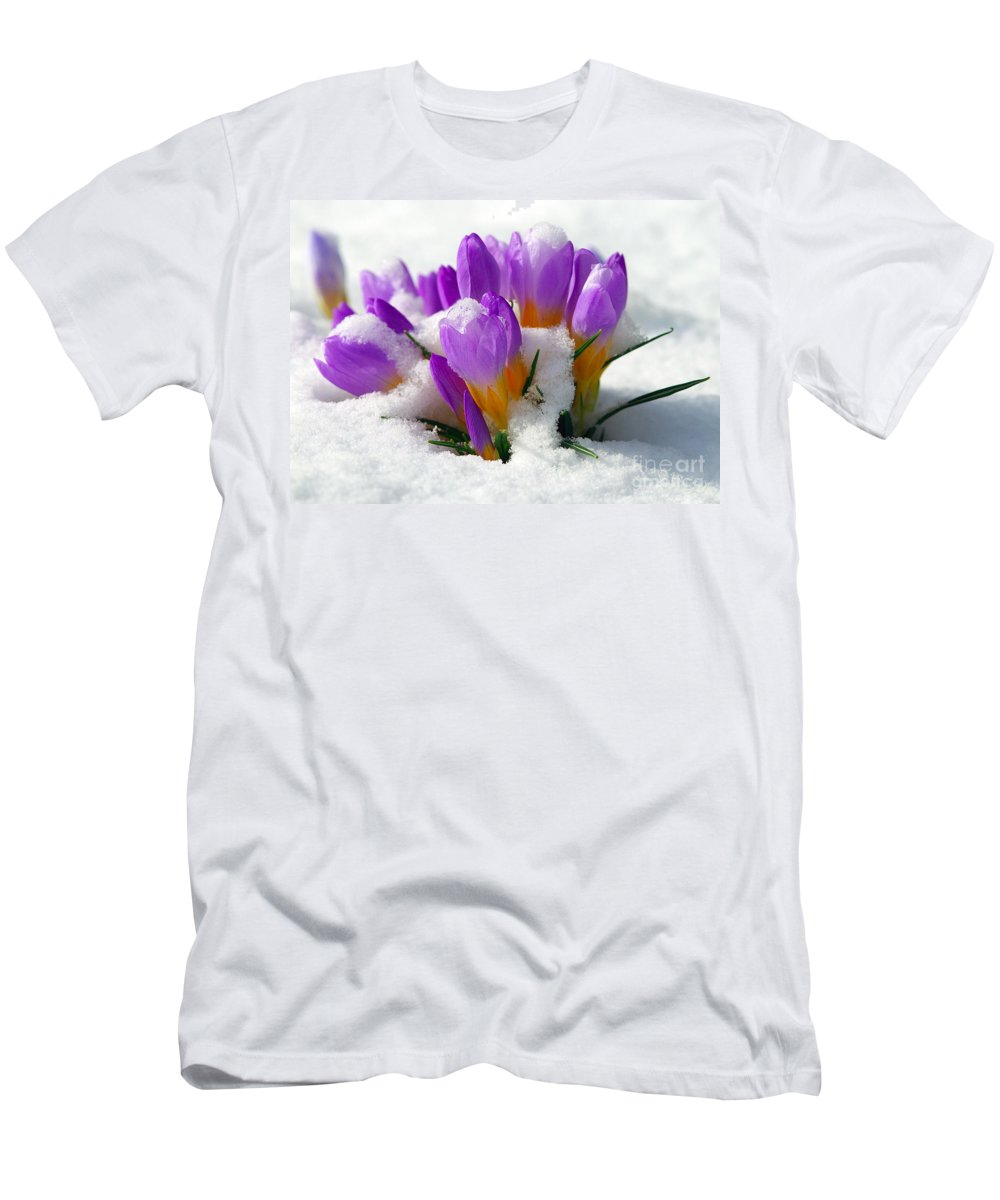 Crocuses Men's T-Shirt (Athletic Fit) featuring the photograph Purple Crocuses In The Snow by Sharon Talson
