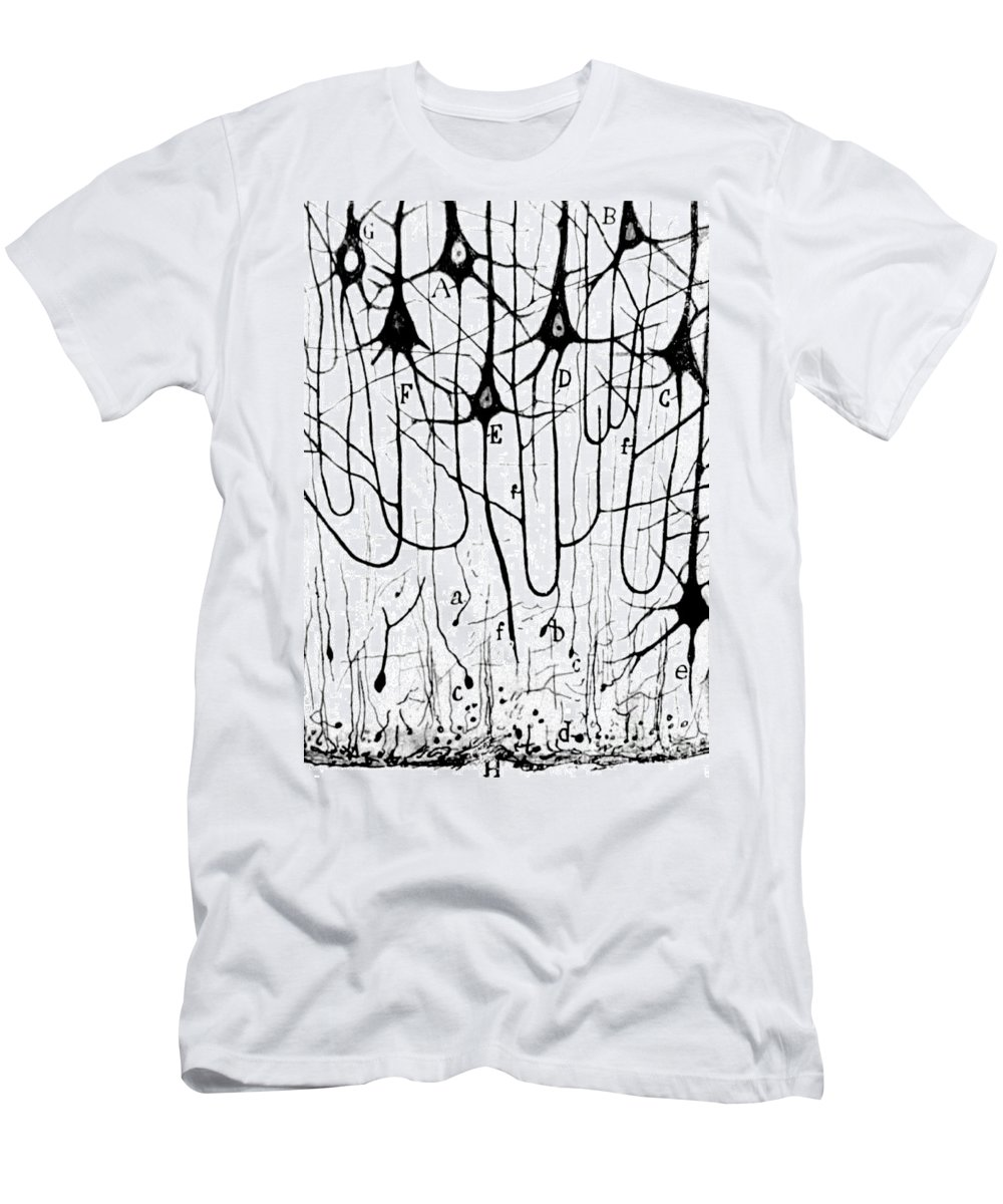Ramon Y Cajal Men's T-Shirt (Athletic Fit) featuring the photograph Pyramidal Cells Illustrated By Cajal by Science Source