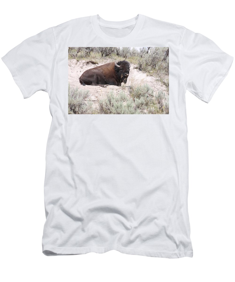 Bison Men's T-Shirt (Athletic Fit) featuring the photograph Resting Bison by Robin Maria Pedrero