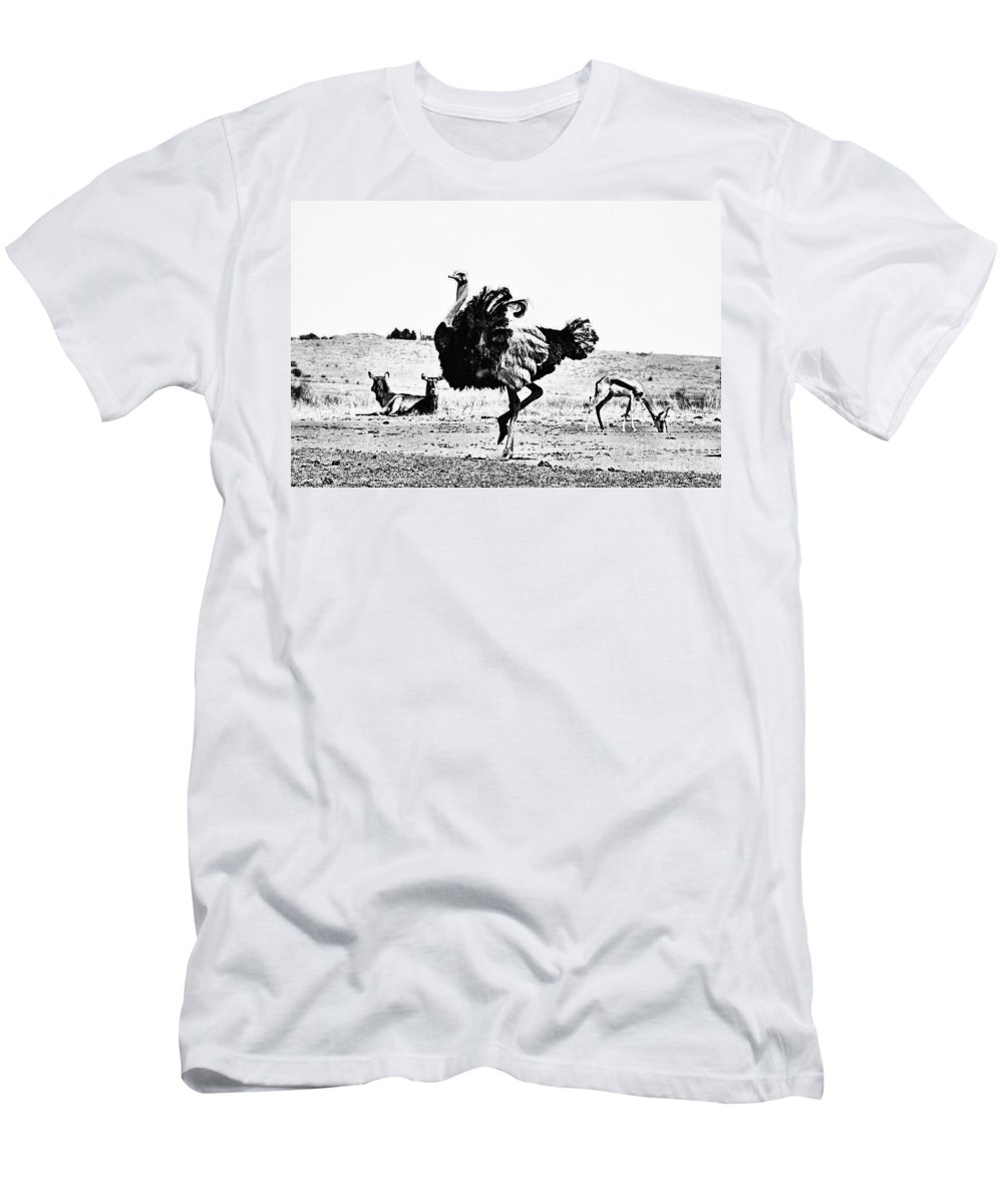 Ostrich Men's T-Shirt (Athletic Fit) featuring the photograph Show-off V2 by Douglas Barnard