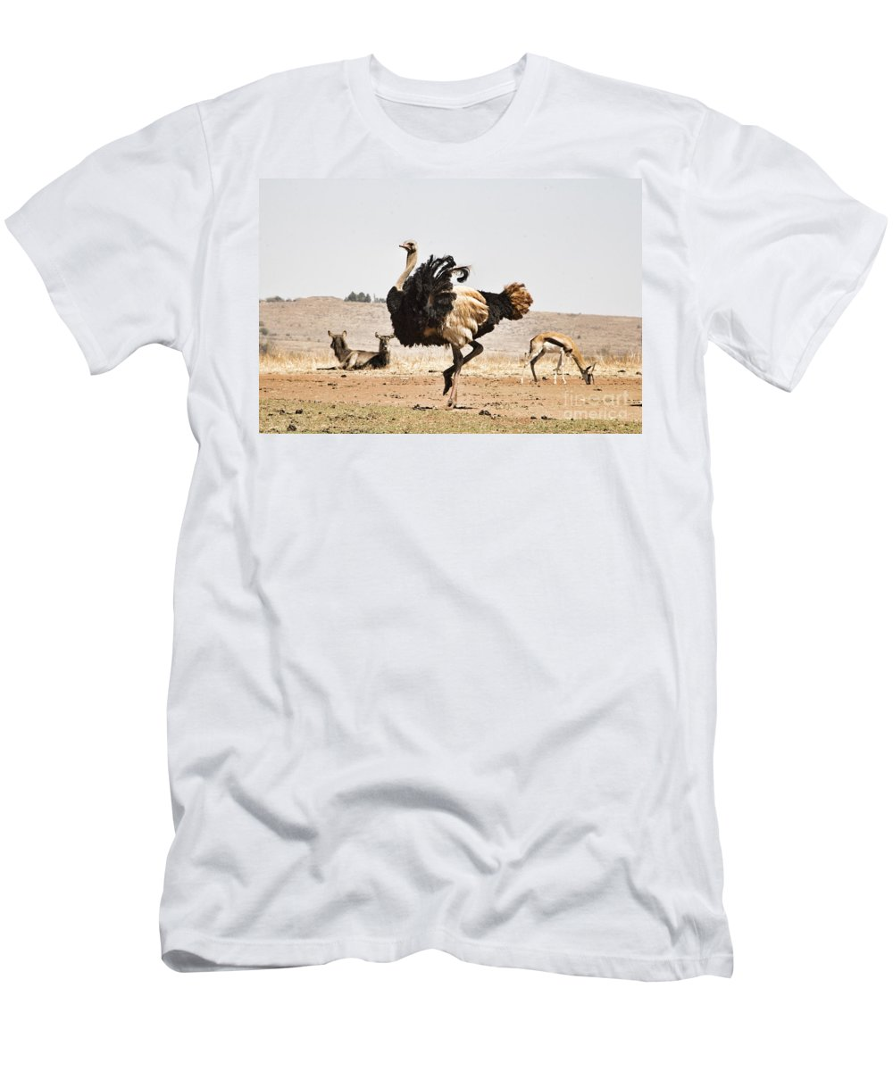 Ostrich Men's T-Shirt (Athletic Fit) featuring the photograph Show-off V3 by Douglas Barnard