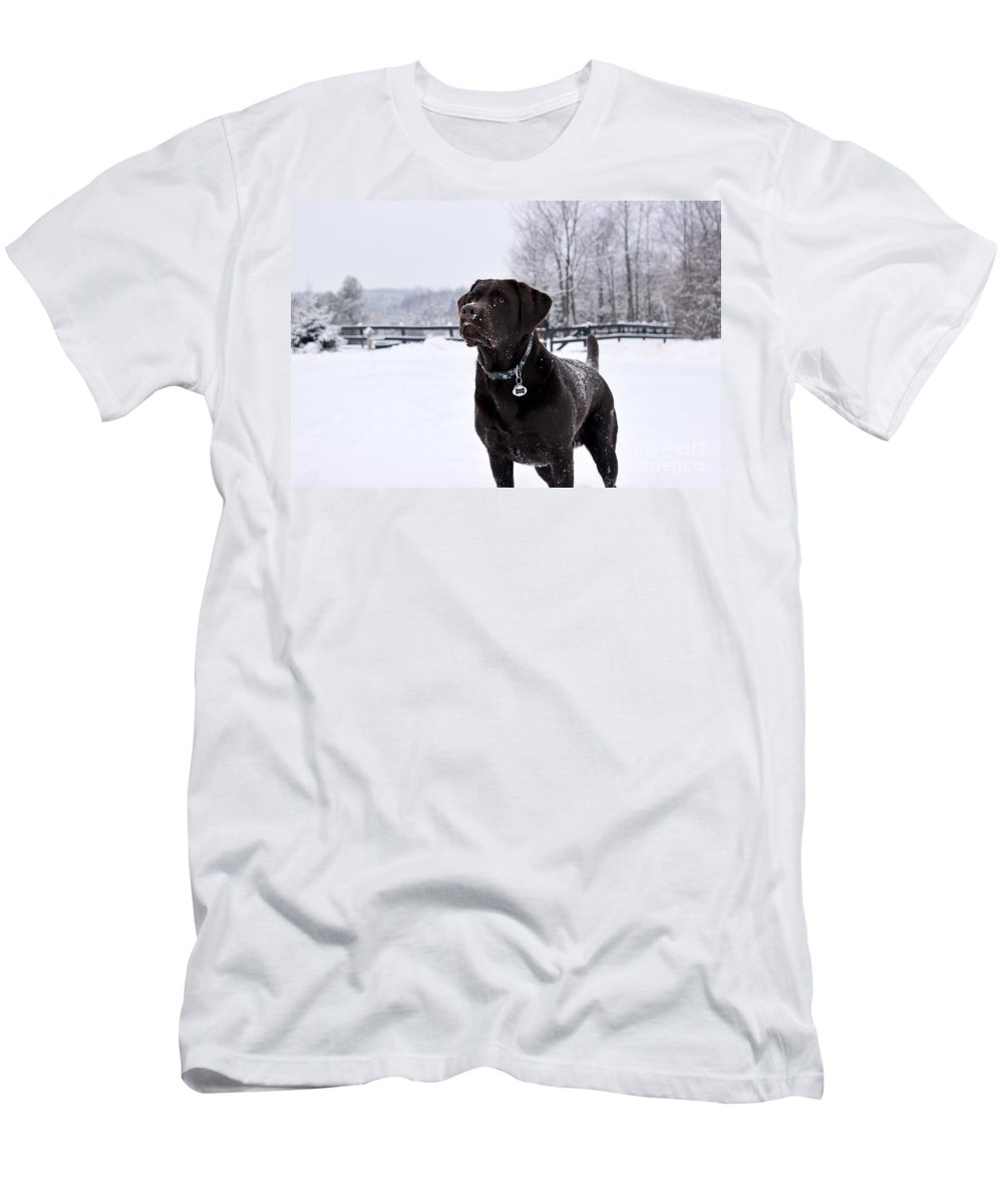 Dog Men's T-Shirt (Athletic Fit) featuring the photograph Stunning Chocolate Lab by Janice Byer