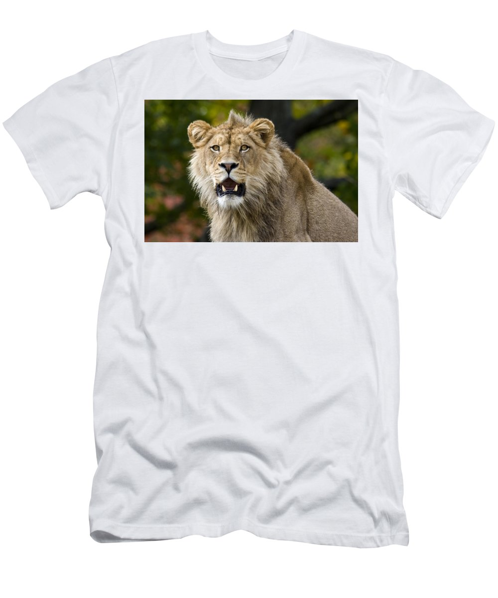 Teenage King Of The Beast Men's T-Shirt (Athletic Fit) featuring the photograph Teenage King Of The Beast by Wes and Dotty Weber