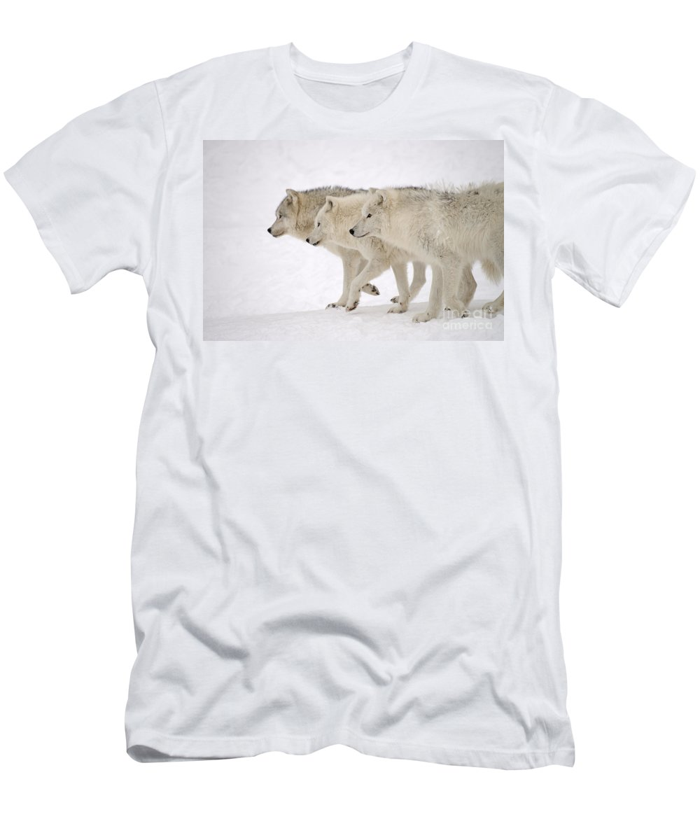 Arctic Wolves Men's T-Shirt (Athletic Fit) featuring the photograph Three Amigos by Joshua McCullough