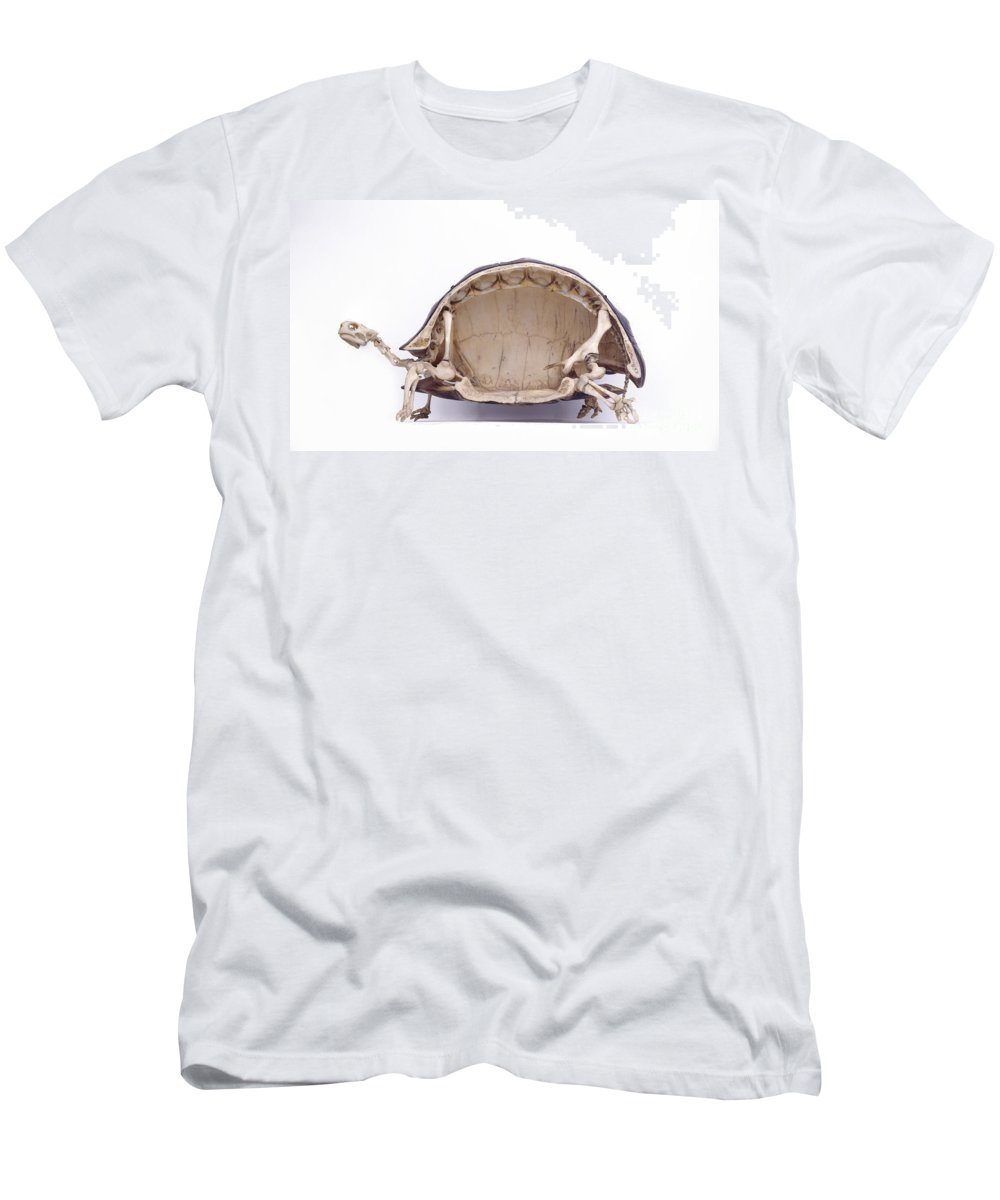 Tortoise Skeleton Cross Section T Shirt For Sale By Colin Keates