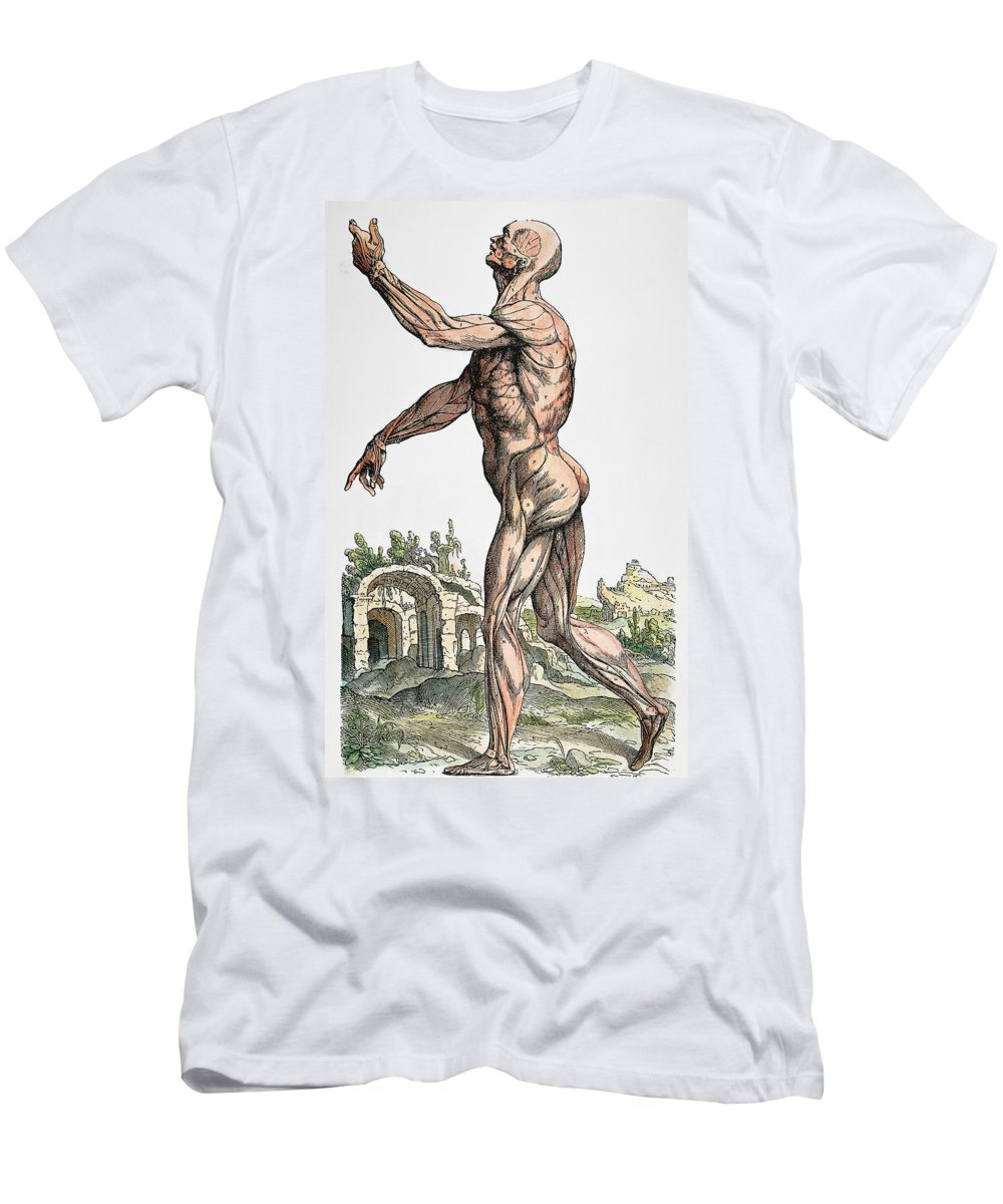 1543 Men's T-Shirt (Athletic Fit) featuring the photograph Vesalius: Muscles 02, 1543 by Granger