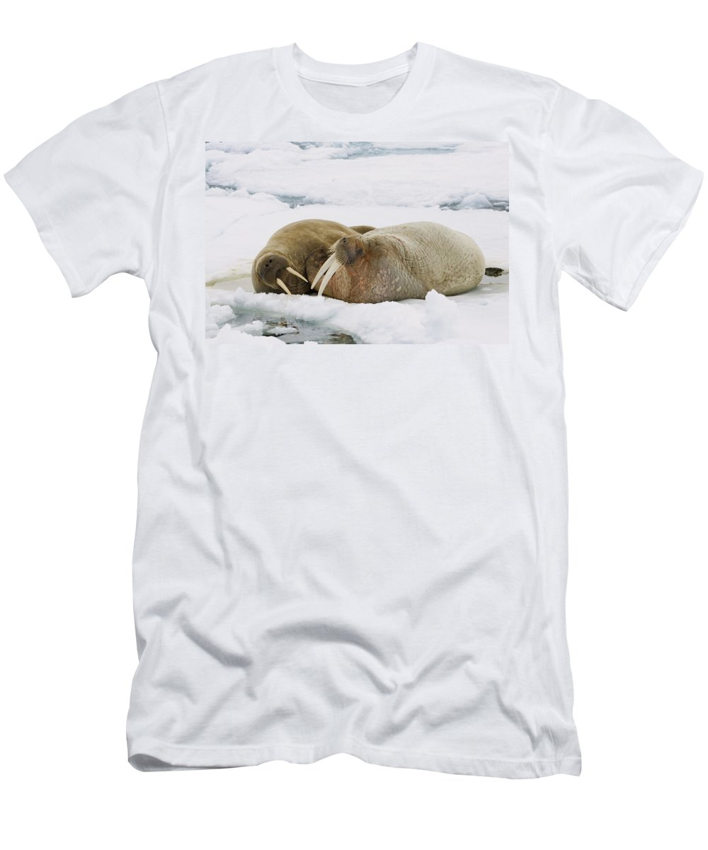 Feb0514 Men's T-Shirt (Athletic Fit) featuring the photograph Walrus Male And Female On Ice Floe by Konrad Wothe