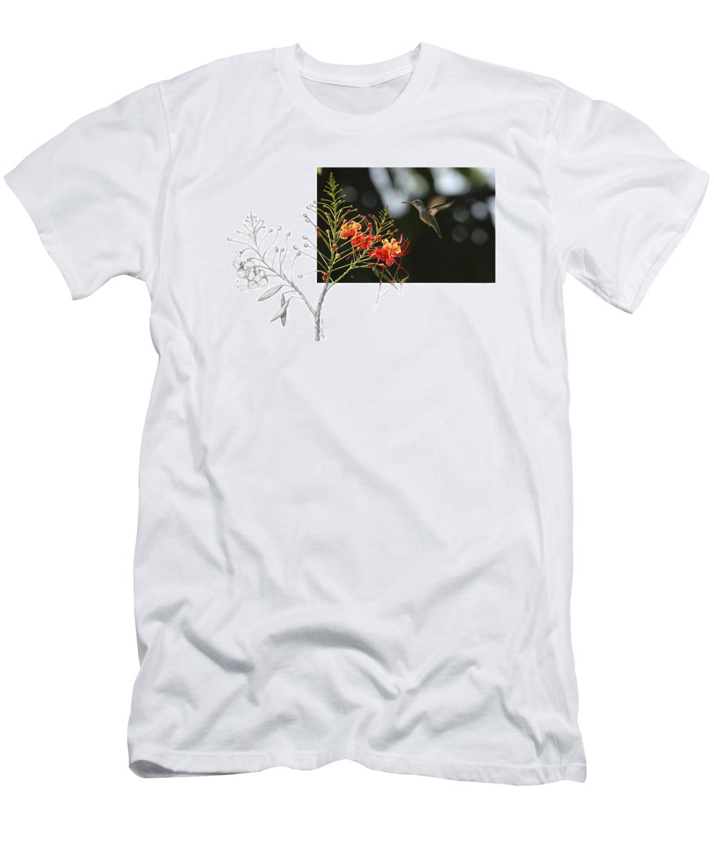 White-bellied Emerald T-Shirt featuring the photograph White-bellied Emerald by Andrew McInnes
