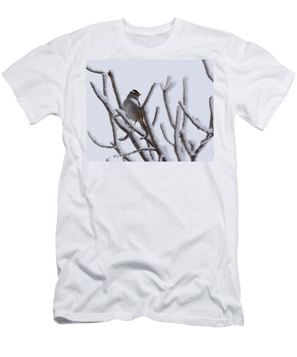 White Crowned Sparrow Men's T-Shirt (Athletic Fit) featuring the photograph White Crowned Sparrow by Ernie Echols